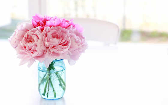 пионы, цветы, банка