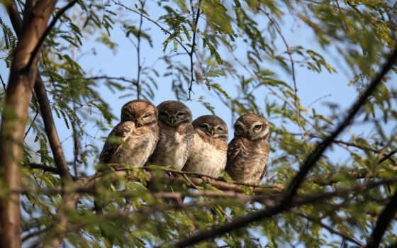 сова, дерево, птица