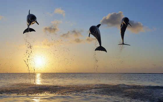 дельфины, прыжке, pictures