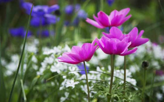 cvety, весна, click, лепестки, природа, макро, one, страница,