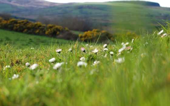 макро, природа, summer, cvety, поле, растения, размытость, ромашки, зелёный, трава, поляна,