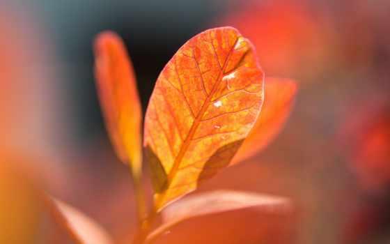 leaf, оранжевый, осень, пасть, природа