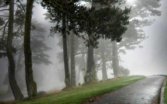 туман, природа