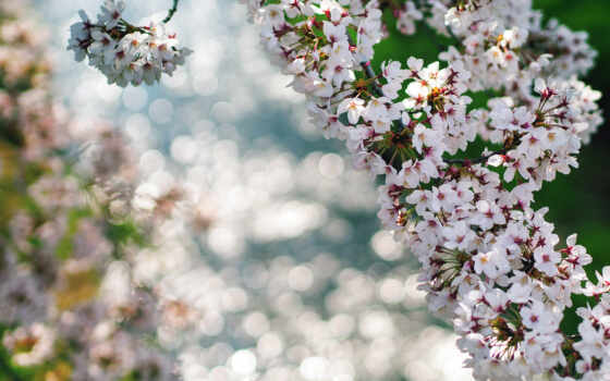 весна, макро, ветки