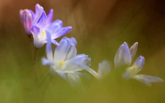 цветы, summer, качестве