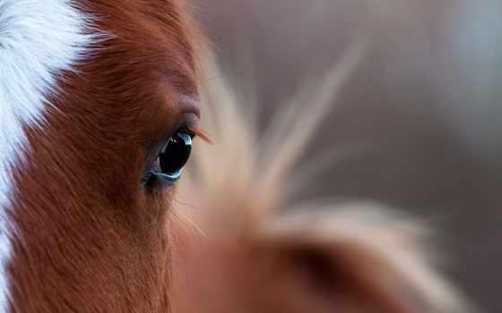лошадь, глаз, свет