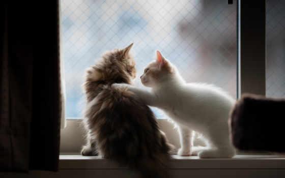 пушистые, котята, pair, няшки,