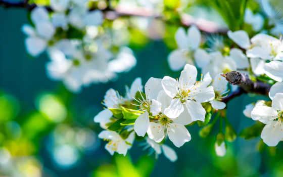 природа, природы, лепестки, apple, cheap, красавица, drawing, весной, но, фотографий,
