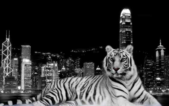 zhivotnye, тигр, гавань