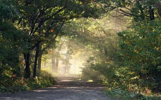 пейзажи -, красивые, лес, дороги, file, trees, лесные, sunshine, кирпичные,