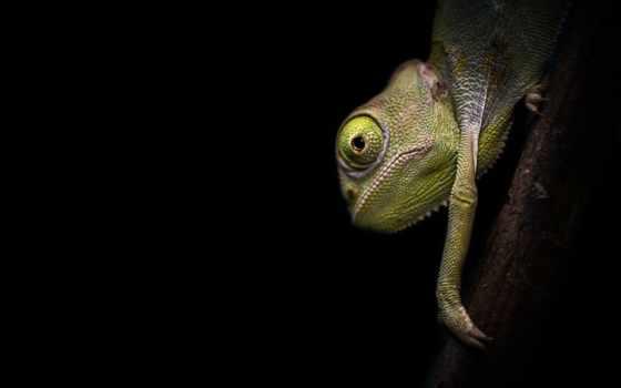 chameleon, orient, rods, lb, красиво, rod, карповое, производитель,