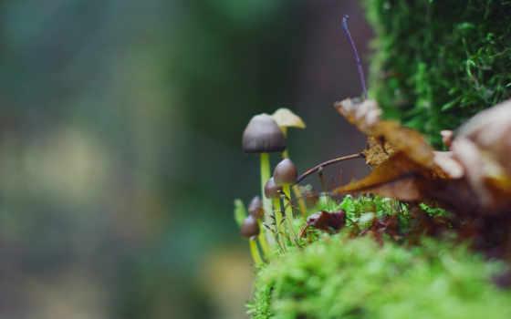макро, birth, капли, water, лес, листва, категории, цветы, грибы, зелёный,