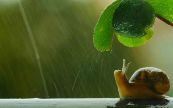 snail, под, дождем, летняя, макрофотография, природы,