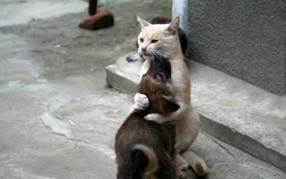 love, кошки, кошек