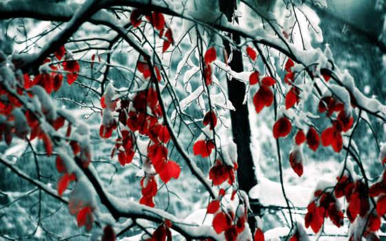 winter, снег, природа