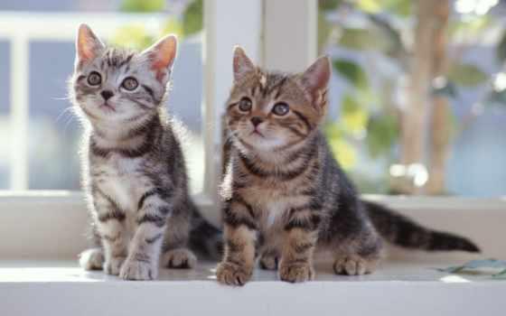 котята, кошки, совершенно, свой, корзинке, качестве,