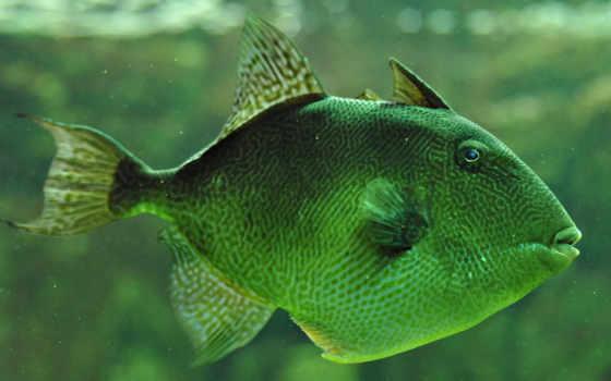 fish, online, пазлы, картинка, тело, окраса, плоское, зеленого, water,