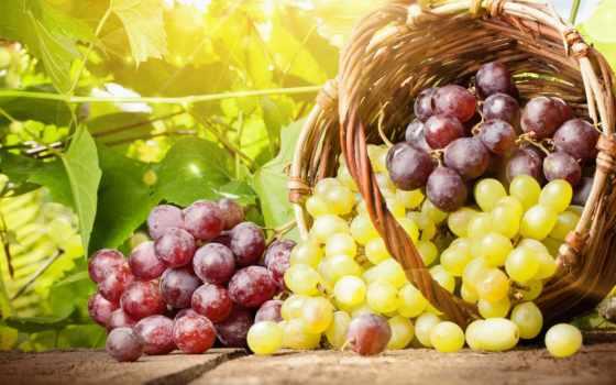 виноград, винограда, ягоды, корзина, еда, сорта, использование, вред, cvety, possible,