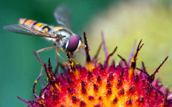 макро, словарный, stock, насекомое, макрофотография, яndex, wide, cvety,