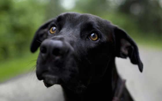собака, black, animal, оценка, котенок
