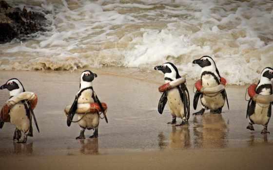 пингвин, circle, rescue, spasatel, health