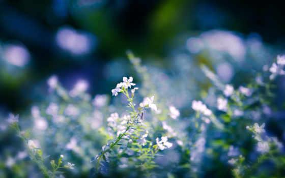 цветы, природа Фон № 27708 разрешение 2560x1600
