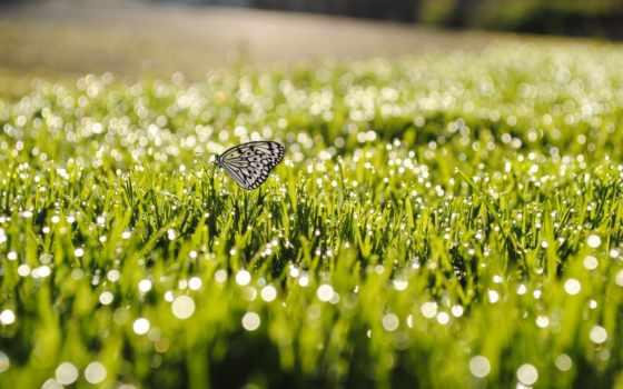 трава, капли, leto, бабочка, priroda, солнце, боке, den,