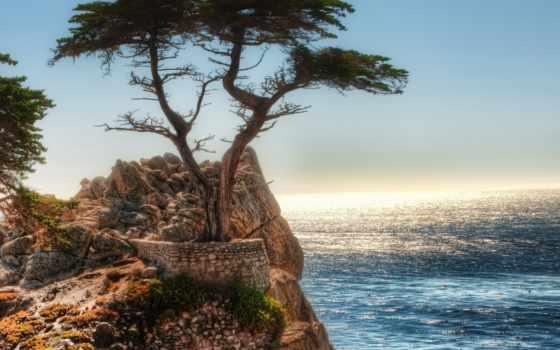 скалы, дерево, ocean, картинка,