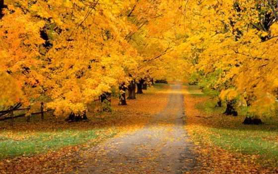 осень, природа, года, time, красивые,