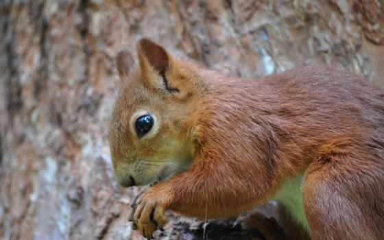 zhivotnye, park, грызуны, дерево, белки, белки, картинка, fiji, бельчонок, страница,