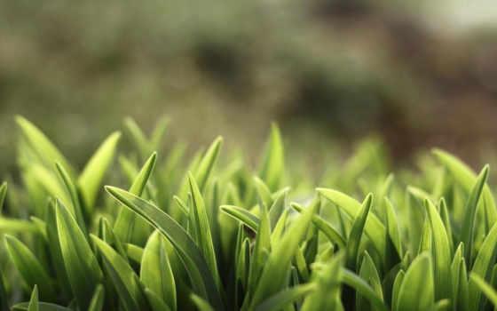 трава, природа, зелёный, макро, summer, газон, растения, высоком, sunshine, качестве,