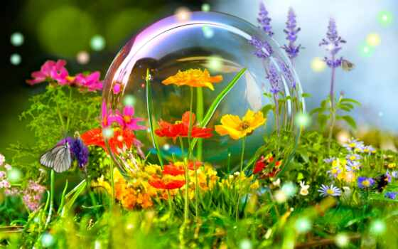 summer, красивый, лет, цветы, мяч, стихи, фото
