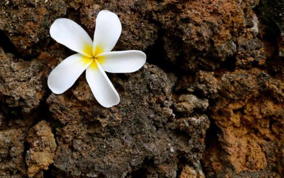 makro, очарование, цветы