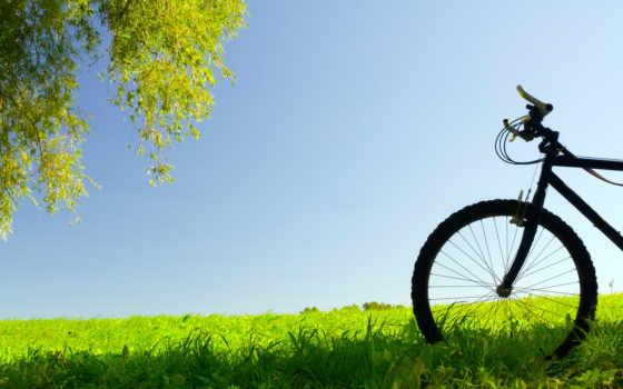 трава, природа, trees