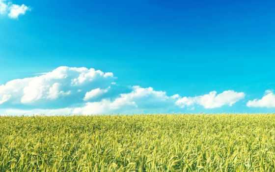 поле, пшеница, rye, злаки, небо, source, горизонт,