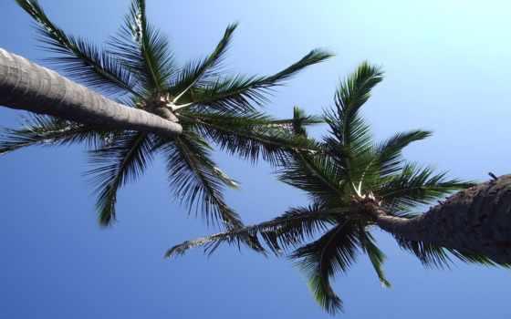 пальмы, tropics, ниже, взгляд, tapeta, lato,