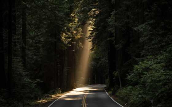 дорога, free, stock, photos, pexels, об, фото, images, лес, сквозь,