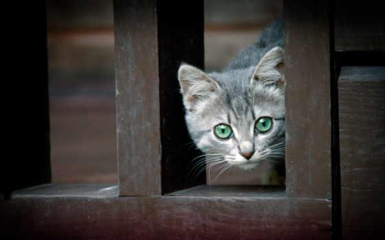 кошки, кот, забор, zhivotnye, дома, коллекция,