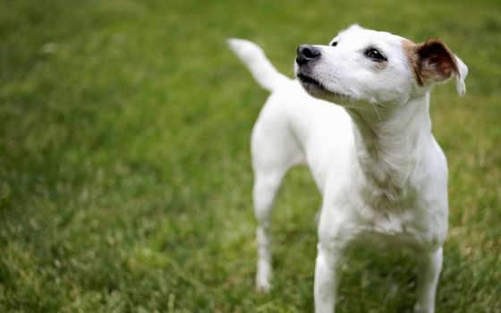 pet, собака, разных, разрешениях, смотрит, природа, сторону, попе,