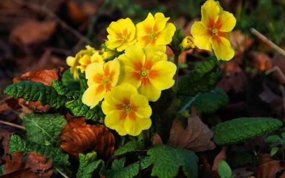 mùa, xuân, nın, hành, hoa, cvety, những, trong, linh, cho,