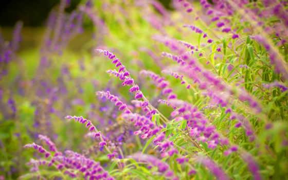 cvety, широкоформатные, красавица, trick, макро, park, весна, трава, цветочки, красивые,