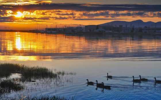 закат, ducks, озеро, небо, shades, природа, sun, тема,