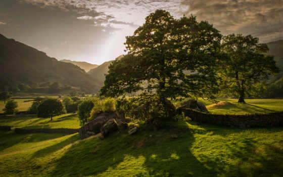 summer, природа, sun, hobbit, трава, дерево, украсят, десктопмания, ваше,