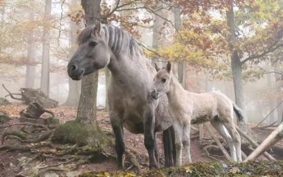 animals, потухший, comics, бесплатные, domesticated, лошади,