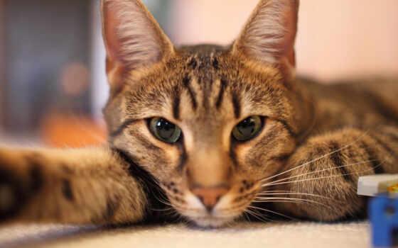 кот, many, картинка, они, есть