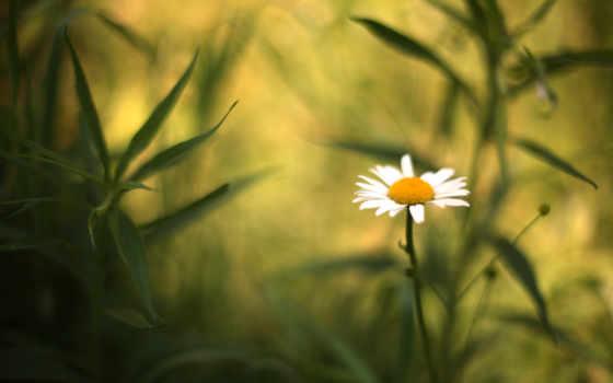 ၾက, цветы, quality