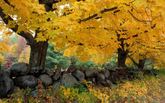 осень, осенние, осеннее, красивые, лес, деревья, дерево, деревьев, за,