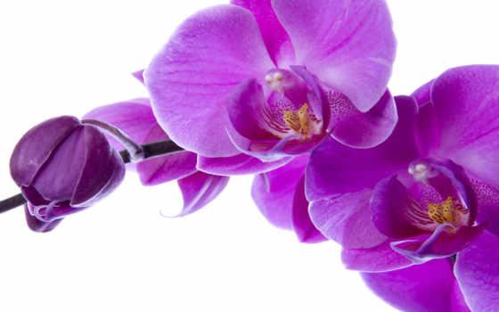фотопанно, орхидеи, доставка