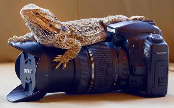 canon, фотоаппарат, ящер, десктопмания, объектив, высококачествен, украсят, место,