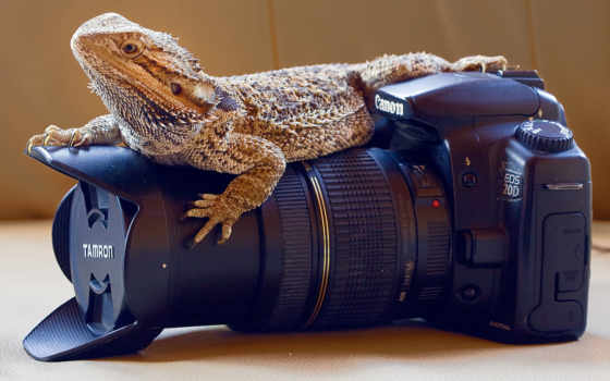 canon, фотоаппарат, ящер